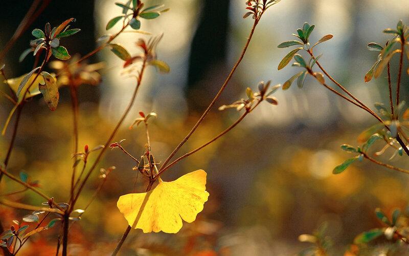 http://img-fotki.yandex.ru/get/9314/97761520.b6/0_7f6f3_acea3c69_XL.jpg