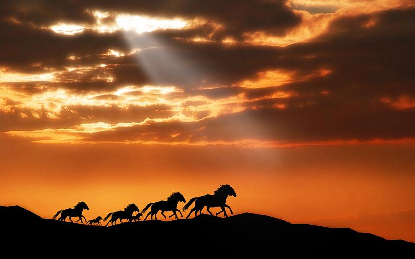 Animals and sunset