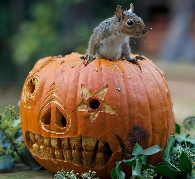 Squirrel by Max Ellis