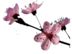 Flower_886775.png