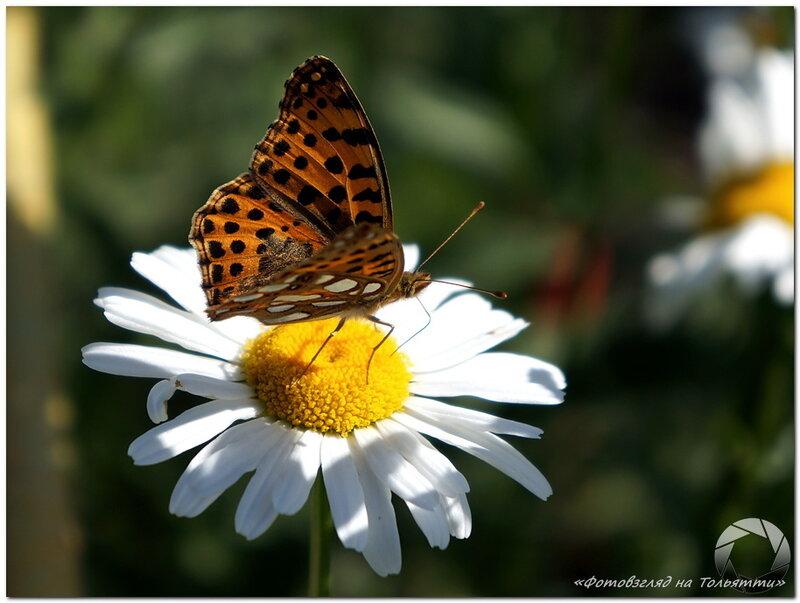 Бабочка. Фотовзгляд на Тольятти