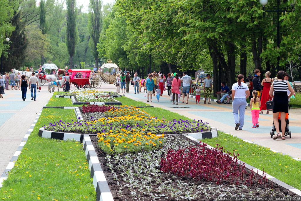 Центр красок цветок белгород