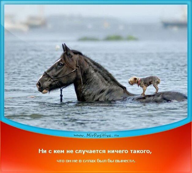 позитивчик дня - Ни с кем не случается ничего такого, что он не в силах был бы вынести.