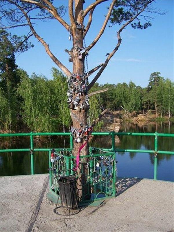 Дерево молодоженов (17.06.2013)
