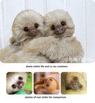 sloths_2.jpg