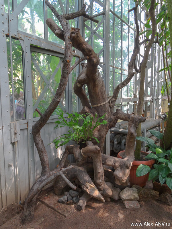 Отжившие свой век растения также продолжают участвовать в выставке.