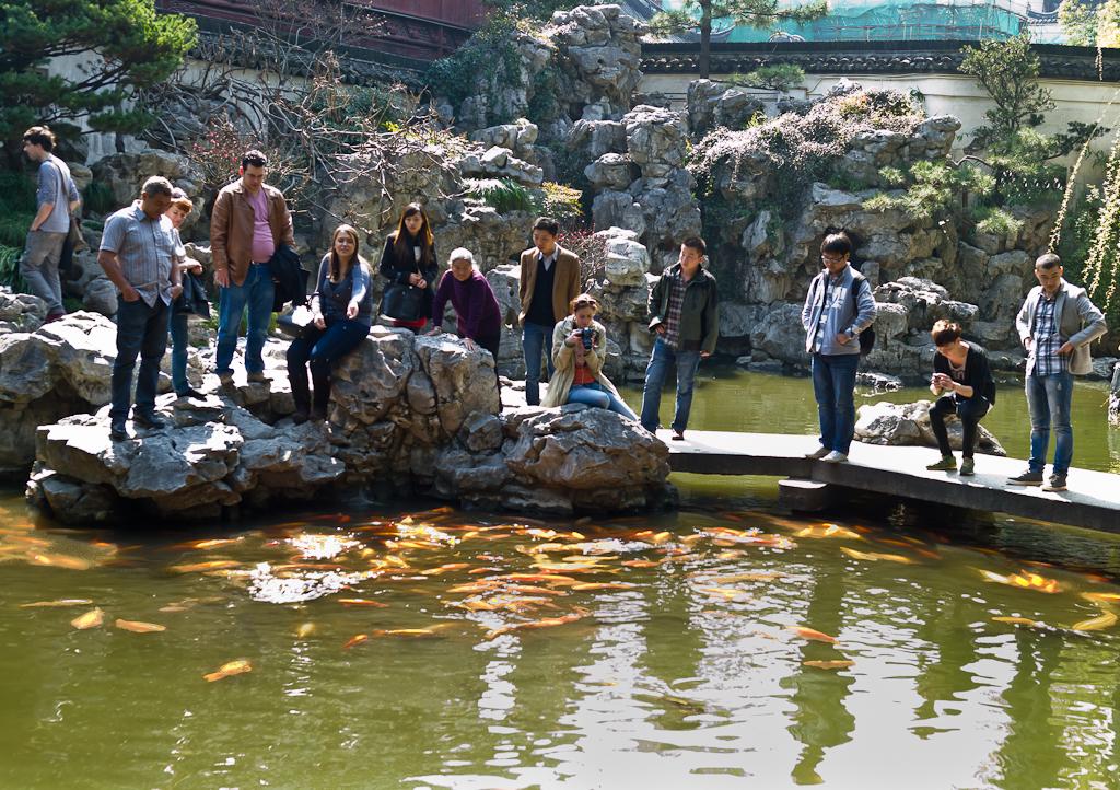 9. Золотые рыбки в Саду радости. Что увидеть в Шанахае за один день. Отчет о второй поездке в Китай.