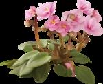 Полевой цветок