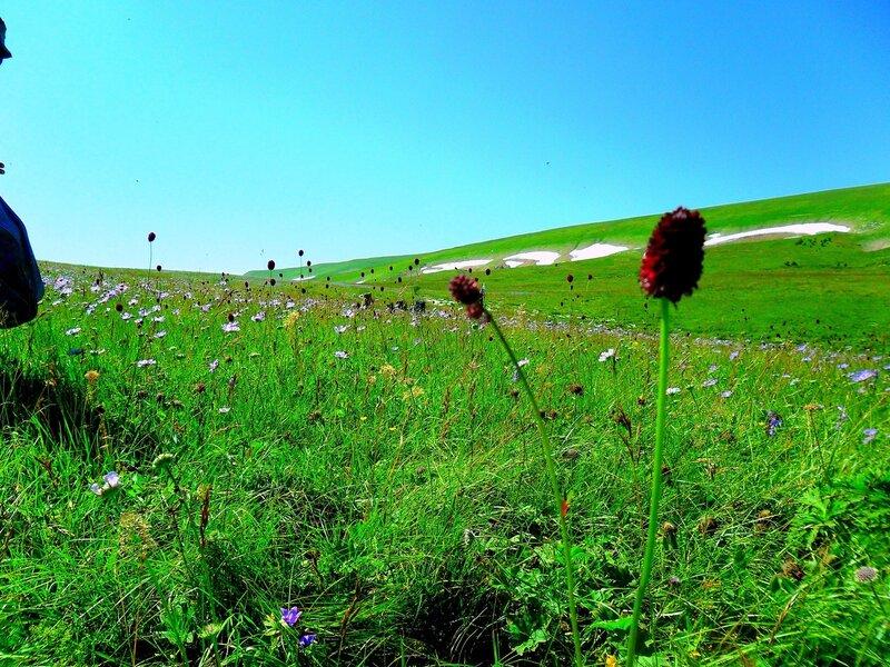 Травы, травы...Фото туристическое