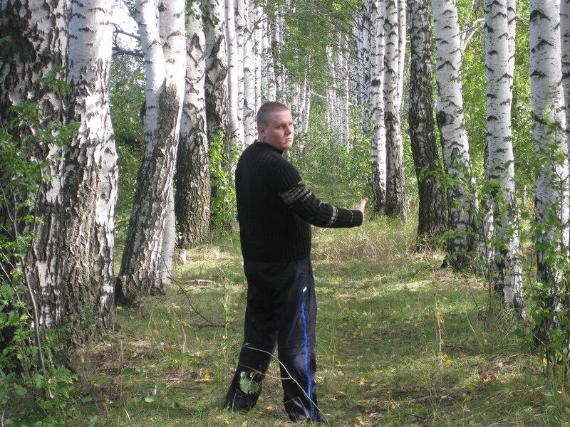 В берёзовой лесопосадки