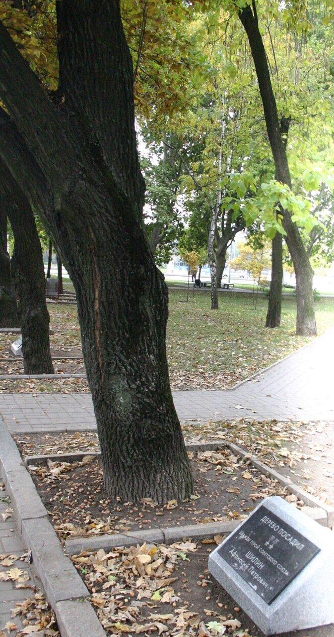 Фотофакт: В Запорожье подписали дубы, высаженные освободителями города, фото-2