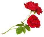 roses forus_element(23).png
