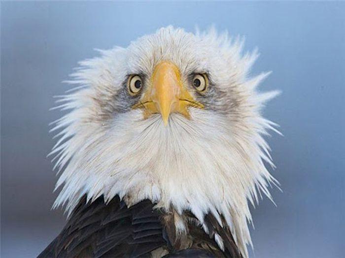Вот почему орлов на гербах чаще всего изображают в профиль