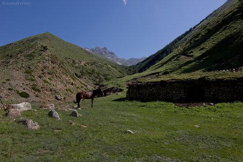 руины старых кошей в ущелье Кыртык