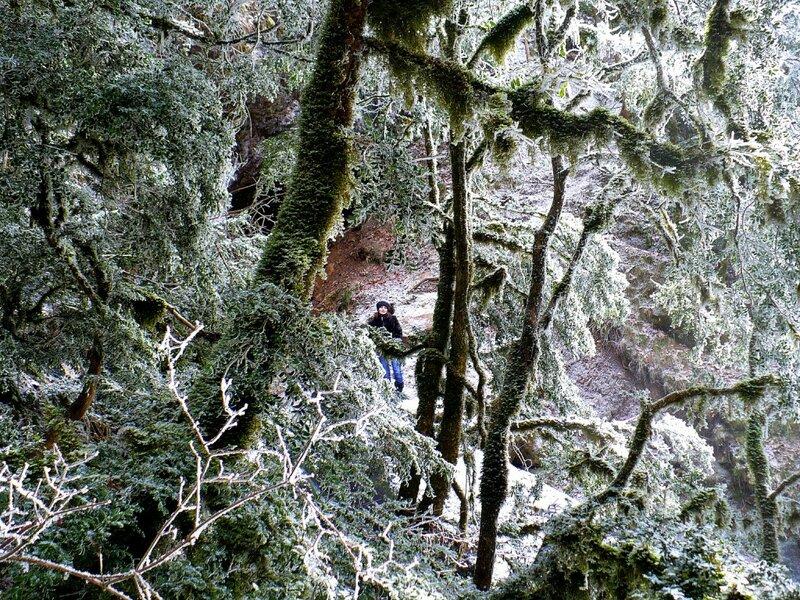 Гуамское ущелье, Кавказ, фотографии Алексея Значкова