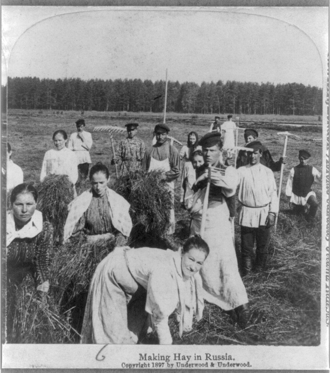Заготовка сена в России.1897
