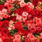 roses (2).jpg