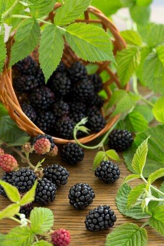 Blackberries.