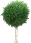 garden_tree_png_by_dbszabo1-d36bc5c.png