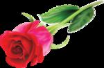 roza2345.png