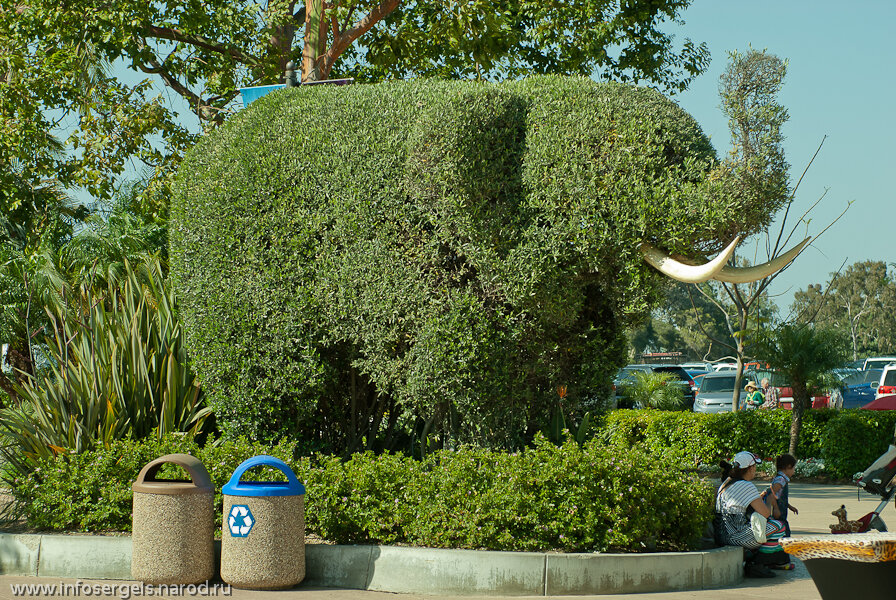 Safari park San Diego California