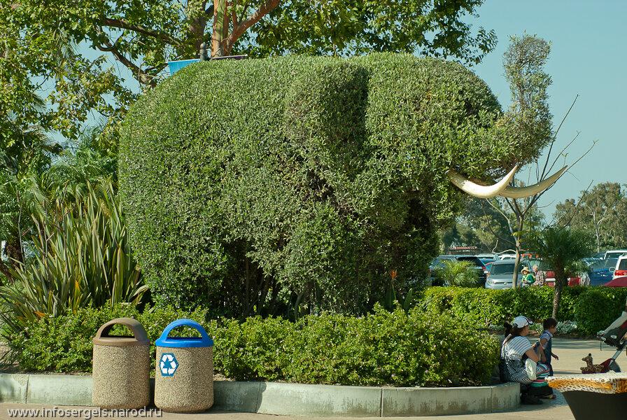 Safari park San Diego California