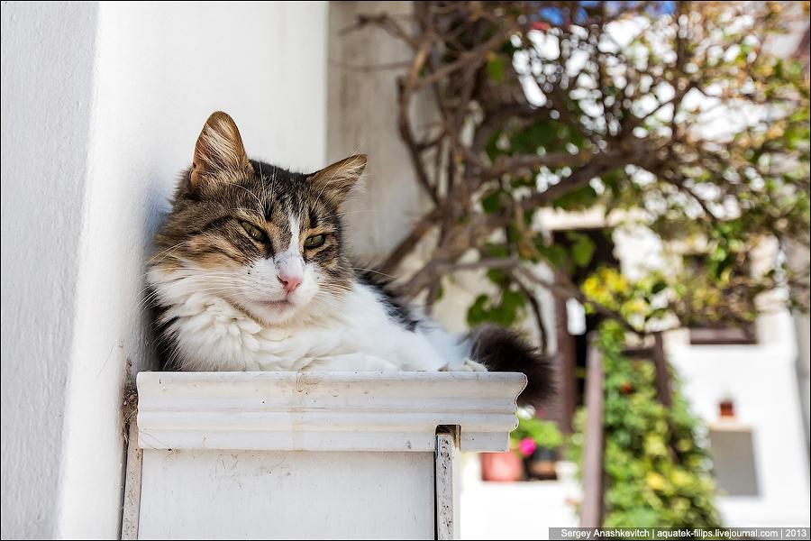 Кикладские коты