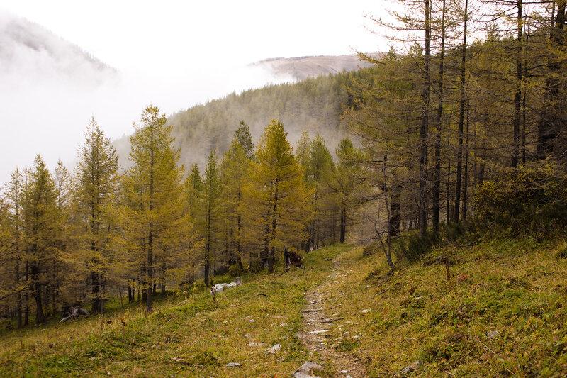 ущелье Верхней Теректы, лес из лиственниц