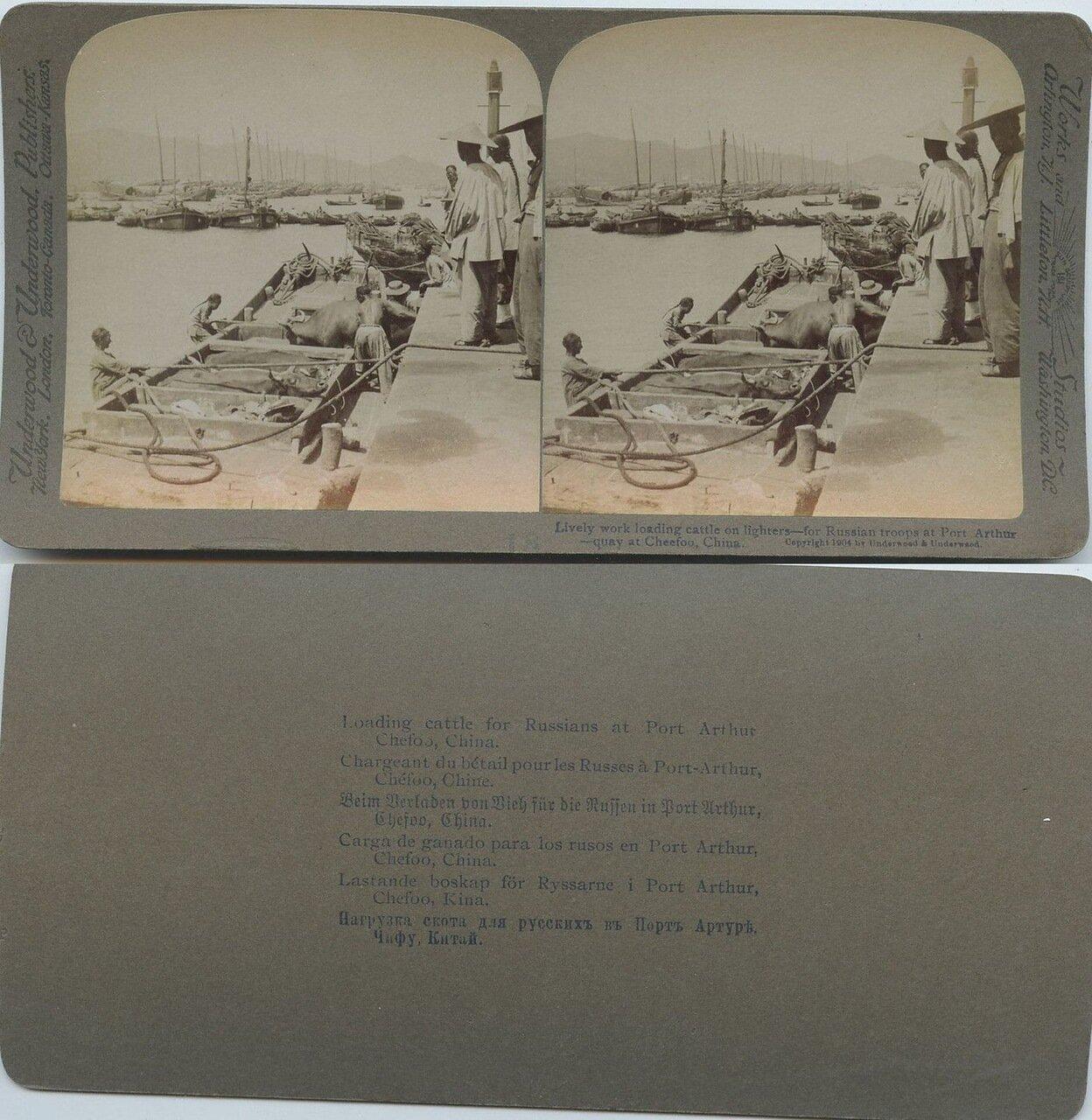 Русско-Японская война. Погрузка скота для русских в Порт-Артуре