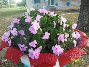 Вот такой цветок я увидела в Рябчинском детском саду.