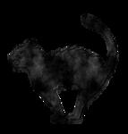 Cat-GI_HallowsEve.png