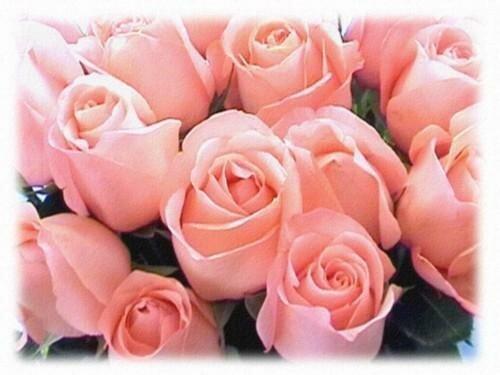Открытки розы.JPG открытка поздравление картинка