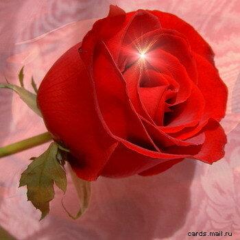 Роза с отблеском открытка поздравление картинка