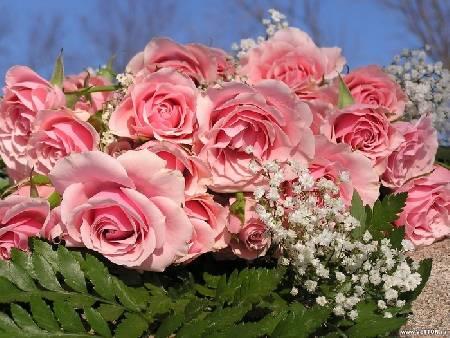 Рожеві троянди приготовані листівка фото привітання малюнок картинка