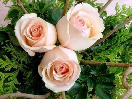 Три розы открытка поздравление картинка