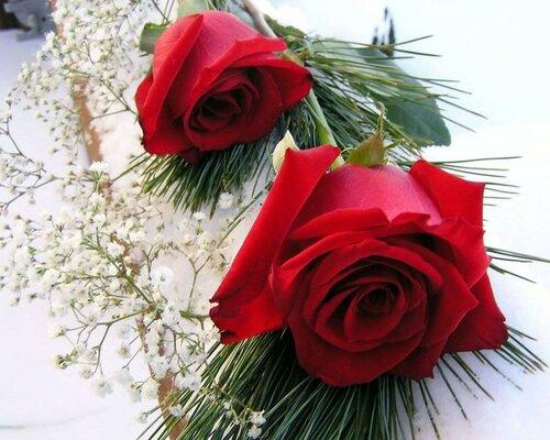 Цветы розы открытка поздравление картинка
