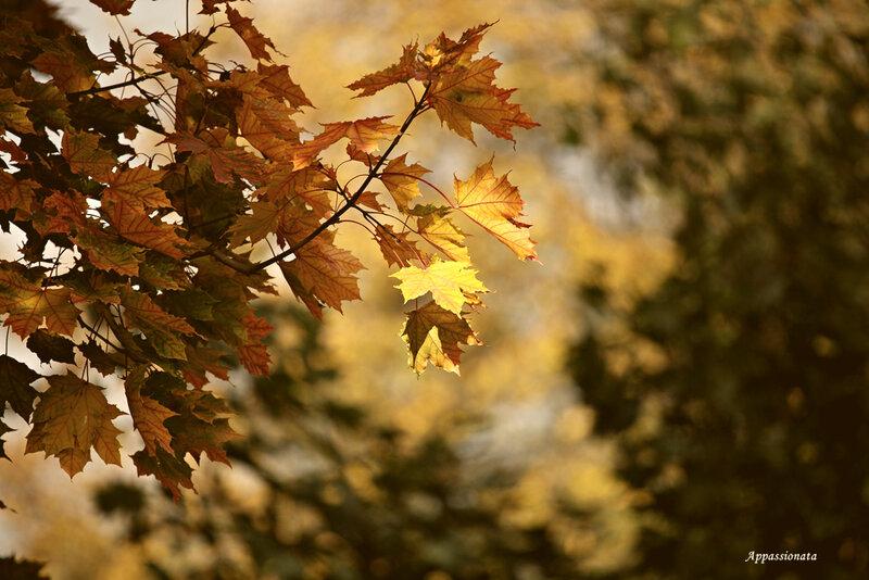 Прогулки по осени 2013
