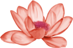 Butterfly Bouquet (50).png