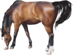 horse_2014 (20).png