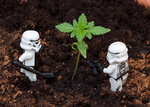 Empire Gardeners 2