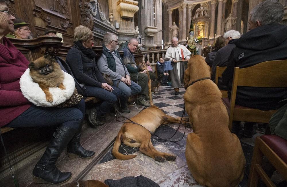 Как в Бельгии благословляют животных