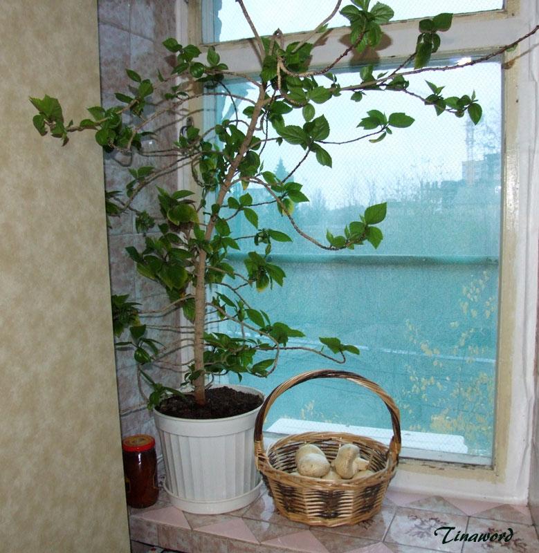 окно-3.jpg