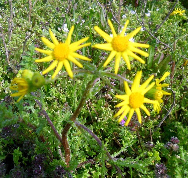 Пора цветения, апрельское фото