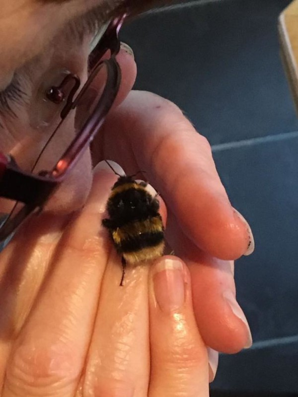 домашние животные домашние питомцы насекомые Шотландия