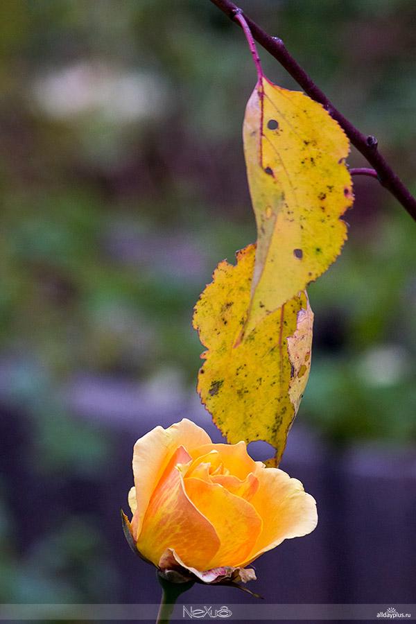 Золотой октябрь | Бабье лето.