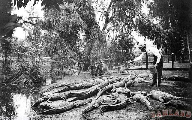 ферма аллигаторов в Лос-Анджелесе