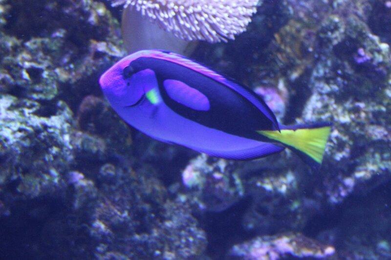 Океанариум, Адлер, 2013