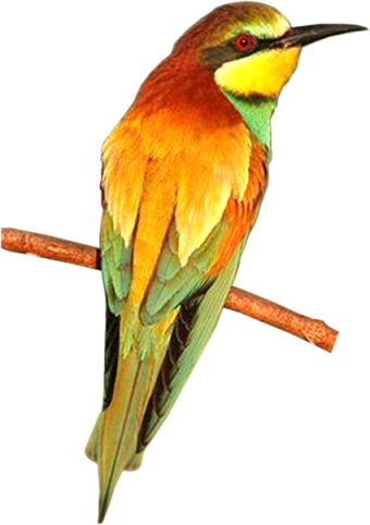Bird30_dhedey.png