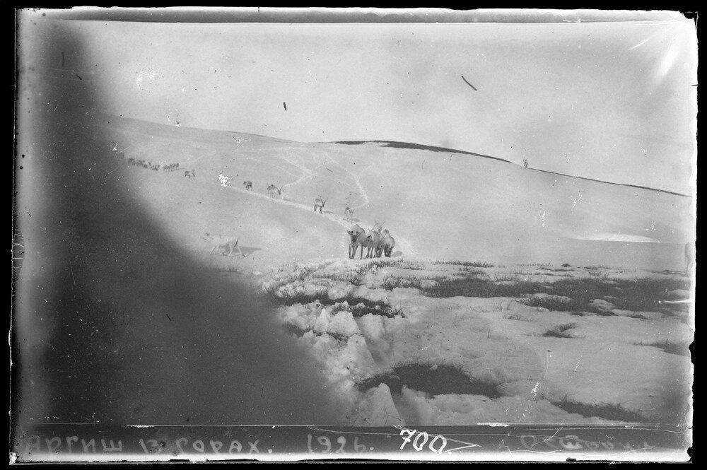 1926.Аргиш (олений обоз) в горах
