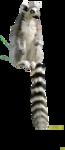 Lemur-Mika.png
